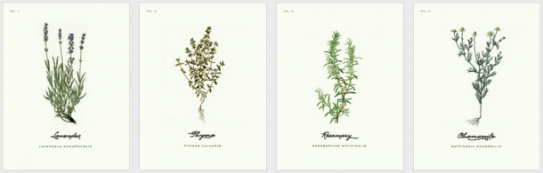 ilustracje botaniczne do wydrukowania