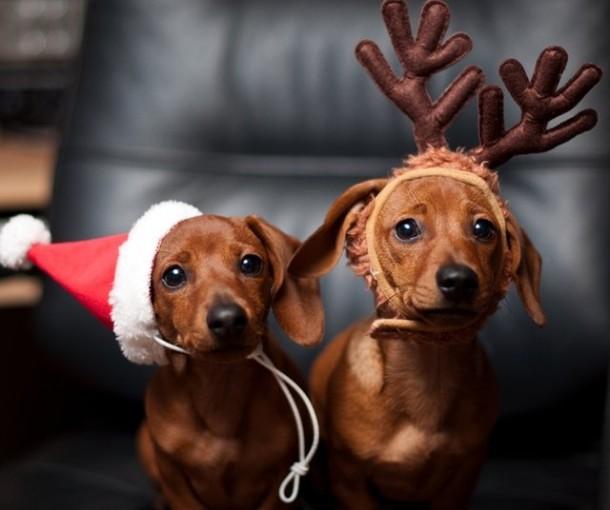 swiateczne psy